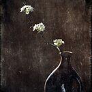 Poiriers dans Ombre et Lumière by Christine Annas