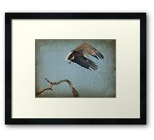 Eagle In Holly Hill Framed Print