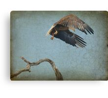 Eagle In Holly Hill Canvas Print