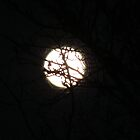 Full Moon March 2012  (please view larger) by Brenda Dahl