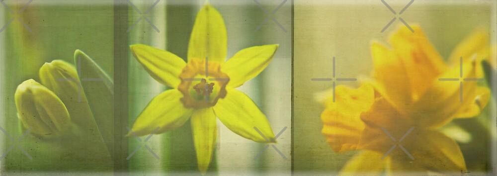 Spring Symphony by Denise Abé