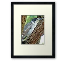 Little Grey Butch Framed Print