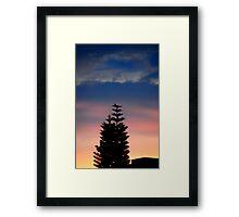 Norfolk Island Pine Sunset Framed Print