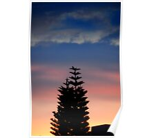 Norfolk Island Pine Sunset Poster