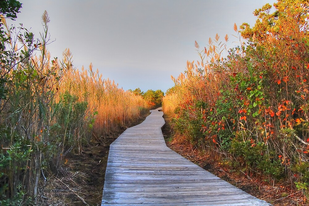 The Boardwalk Path by John  Kapusta