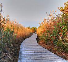 The Boardwalk Path by John  Kapusta