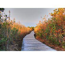 The Boardwalk Path Photographic Print