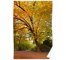 Leaning Tree Poster