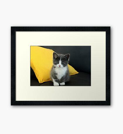Trendy Kitty Framed Print