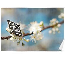 Florida Day Moth Poster