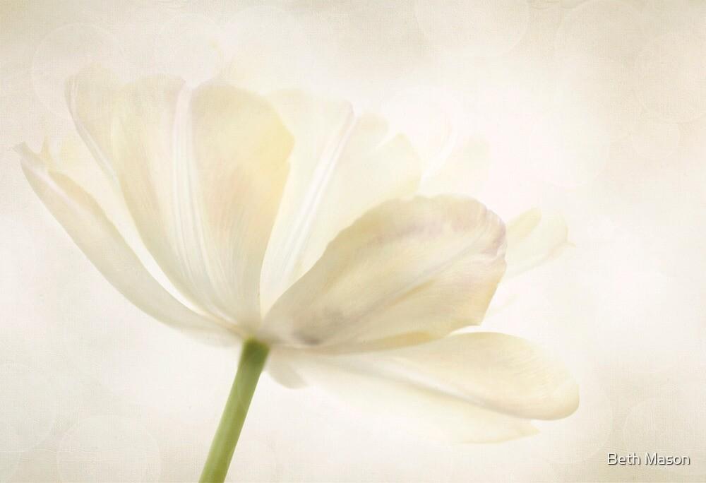 Bokeh Tulip by Beth Mason