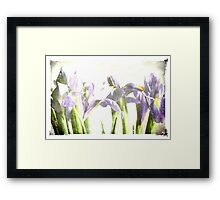 Grunged Iris Framed Print