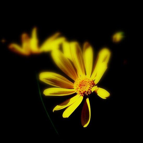 Light through the Dark by Brenda Dahl