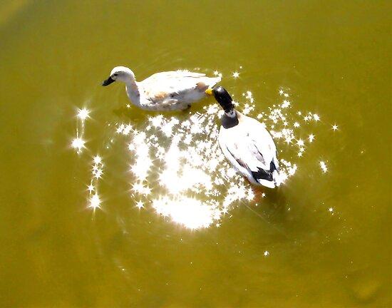 On Golden Pond by Brenda Dahl