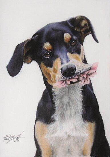 Max, Pastel Dog Portrait by Felicity Deverell