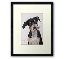 Max, Pastel Dog Portrait Framed Print