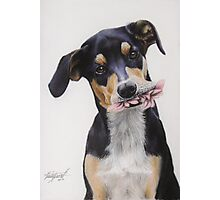 Max, Pastel Dog Portrait Photographic Print