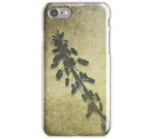 Dried Grape Hyacinths iPhone Case/Skin