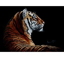 Burning Bright - tiger Photographic Print