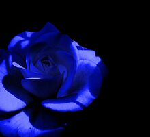 Blue Rose, in Darkness by LydiaWoods