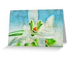 Grungy Snowdrop Greeting Card