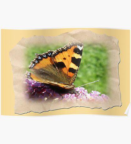 Framed Wings Poster