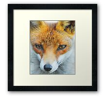 In your face Vixen Framed Print
