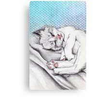 Cat sleeping Canvas Print