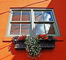 the color of orange by Lynne Prestebak