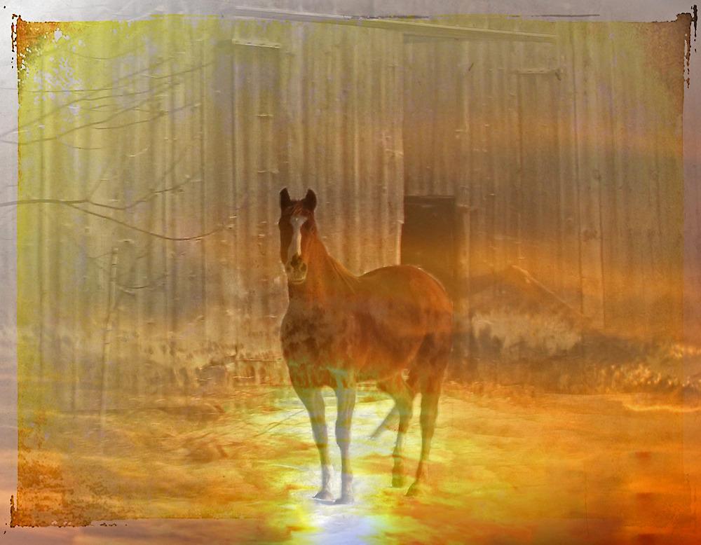 Haunted Horse by nikspix
