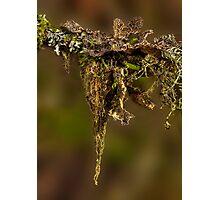 Lichen combo Photographic Print
