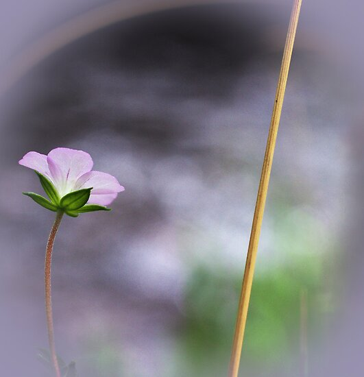 A tiny wee flower at the water's edge by Clare Colins