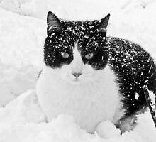 Snow Kitty Black & White by nikspix