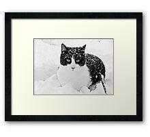 Snow Kitty Black & White Framed Print