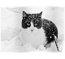 Snow Kitty Black & White Poster