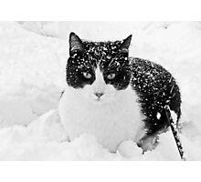 Snow Kitty Black & White Photographic Print