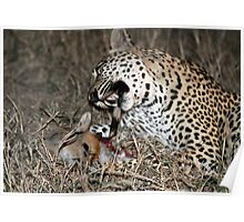 Leopard/duiker interaction 6-the end Poster
