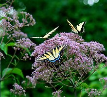 Butterfly Symposium by roysmith