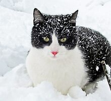 Snow Kitty by nikspix
