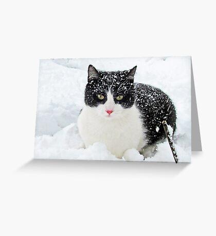 Snow Kitty Greeting Card