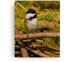 Brush Pile Chickadee Canvas Print