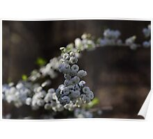 Bridal Wreath Poster