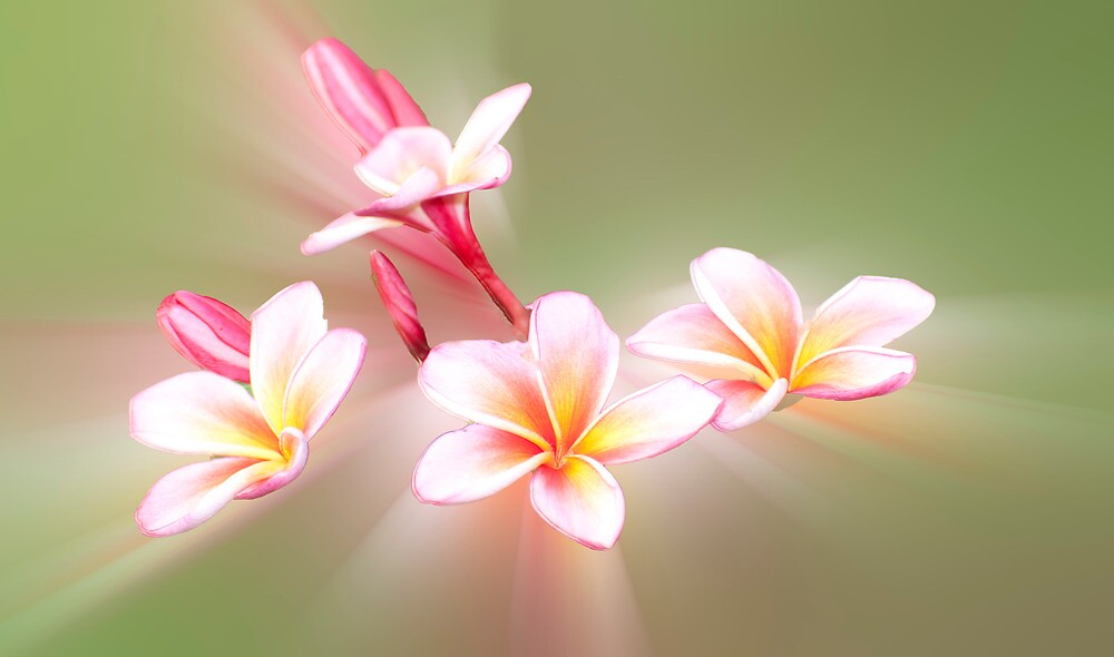 Flower Power  by Jenny Dean