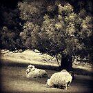 Sheep by James McKenzie