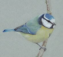 Blue Tit by Catherine Gabriel