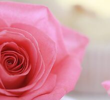 Pink Rose by Bevlea Ross