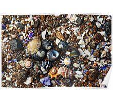 Seashells on the sea shore Poster