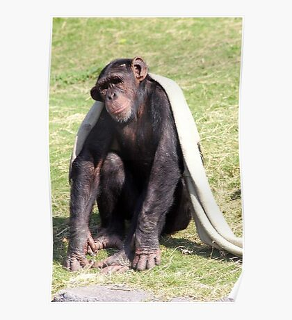 Chilled Chimp Poster