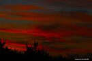 sunset Silhouette 001 by Karl David Hill