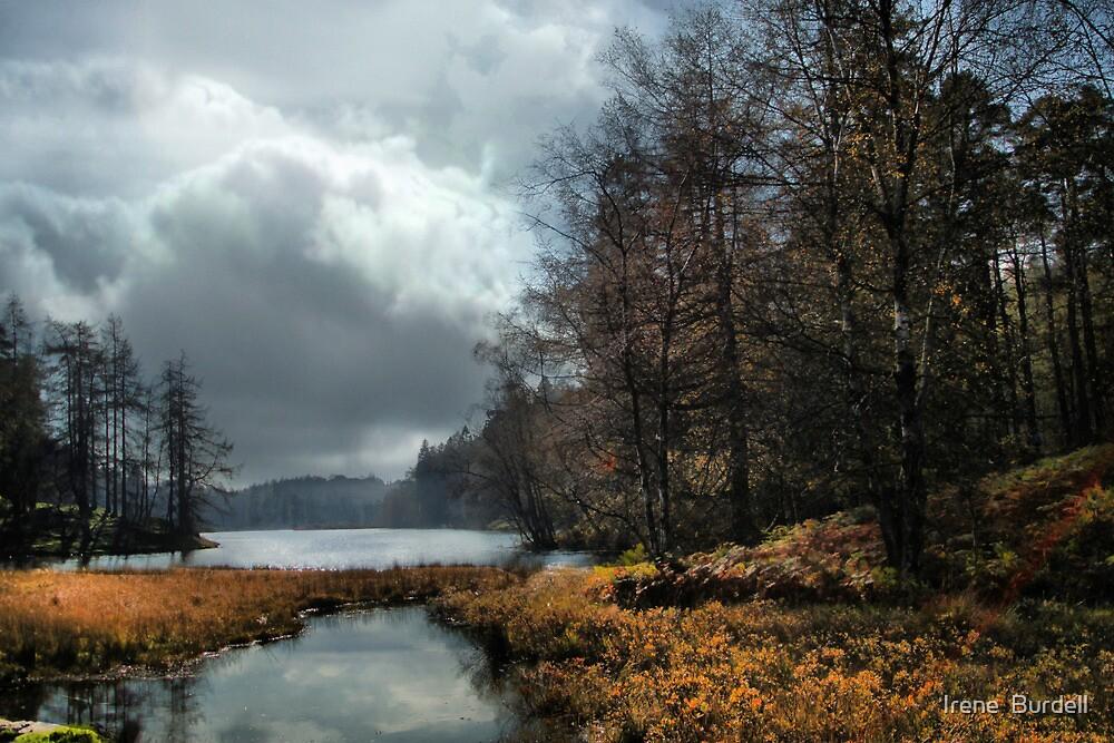 Rain on the way ! by Irene  Burdell